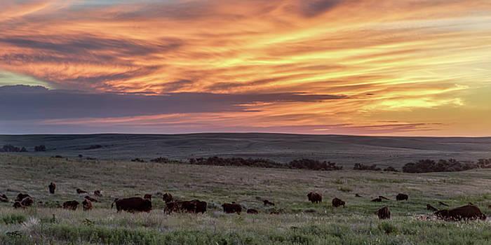 Rob Graham - Bison at Sunrise