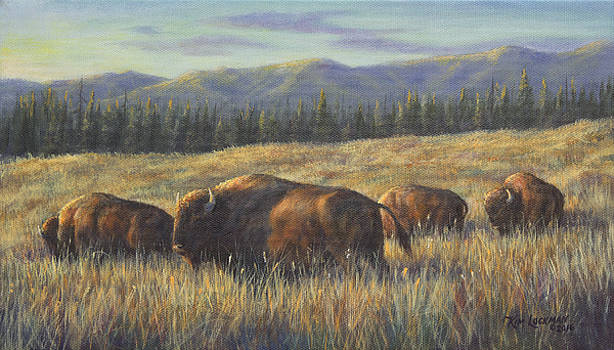 Bison Bliss by Kim Lockman