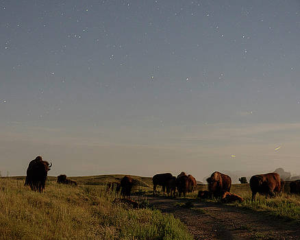 Rob Graham - Bison by moonlight 01