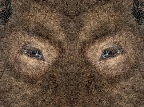 Bison Eyes by David Kehrli