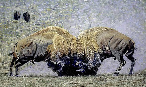 Bison Fight Original Oil Painting 60x36x1.5 inch by Manuel Lopez