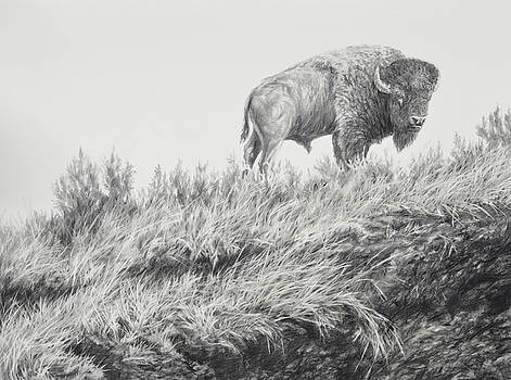 Bison in Grass by Jim Young