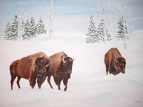 Bison In The Snow by Ellen Canfield