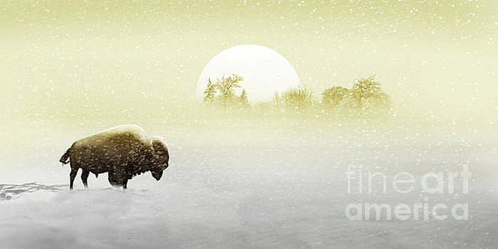 Bison in the snow by Monika Juengling
