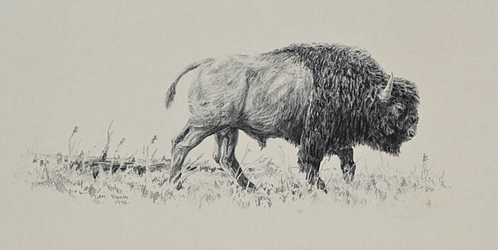 Bison by Jim Young