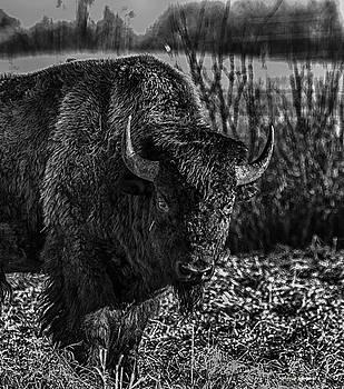 Bison by Melanie Janzen