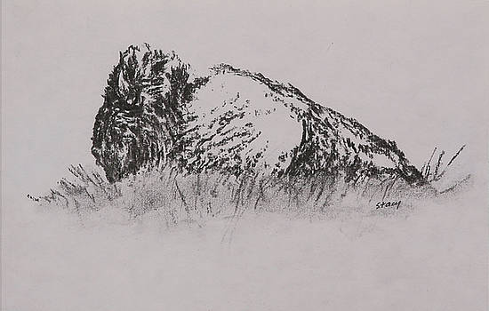 Bison by Stacy Williams