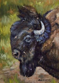 Bison Study 5 by Lori Brackett