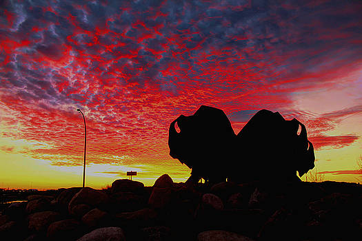 Bison Sunset by Larry Trupp