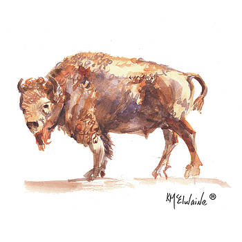 Summer Bison The Bison is the United States of America First Mammal B2016 watercolor painting by Kathleen McElwaine