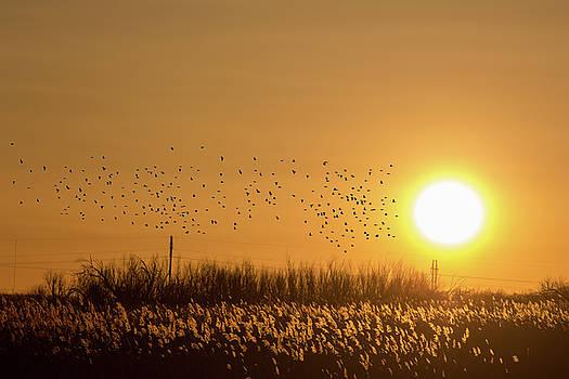 Bitter Lake National Wildlife Refuge Birds by G Matthew Laughton