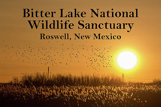 Bitter Lake National Wildlife Refuge Birds, Roswell, New Mexico by G Matthew Laughton