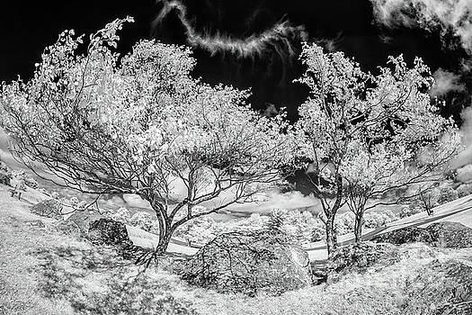 Bizarre Trees and Rocks in the Blue Ridge BW by Dan Carmichael
