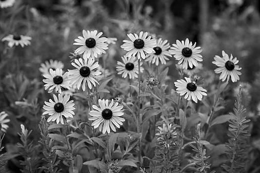 Jimmy McDonald - Black and White 116