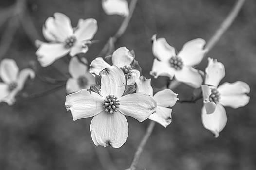 Jimmy McDonald - Black and White 81