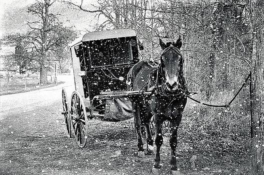 Black and White Amish Buggy by Stephanie Calhoun