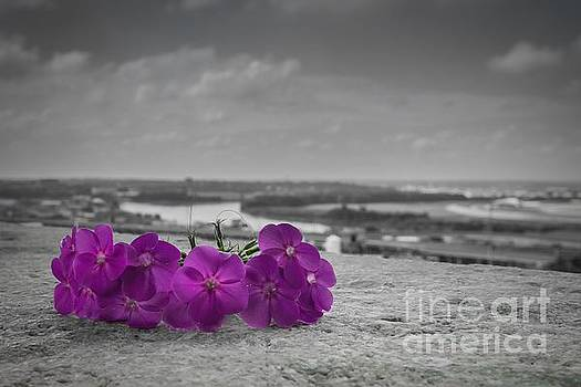 Black and White and Purple by Lisa Plymell