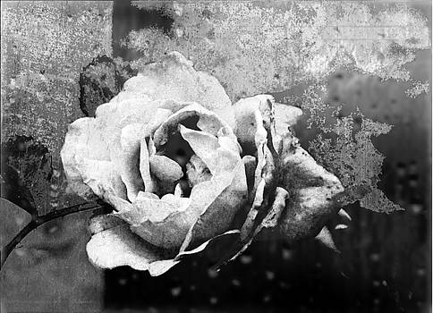 Textured Black And White Vintage Rose  by Andrew David Photography