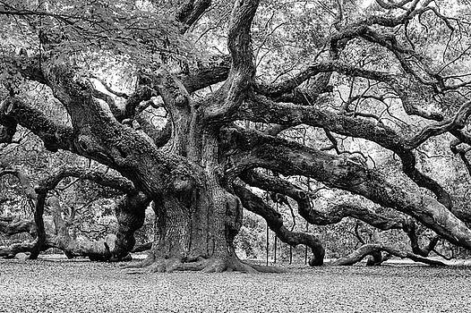 Louis Dallara - Black and White Angel Oak Tree