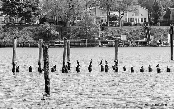 Black And White Bird Sanctuary by Brian Wallace