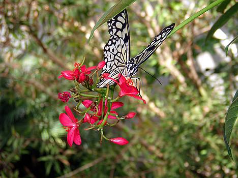 Nicole I Hamilton - Black and White Butterfly