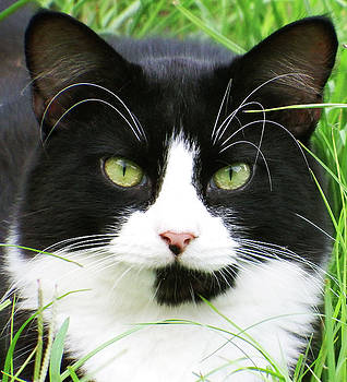 Black and White Cat by Cathy Harper