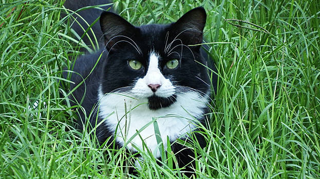 Black and White Cat with Green Eyes by Cathy Harper