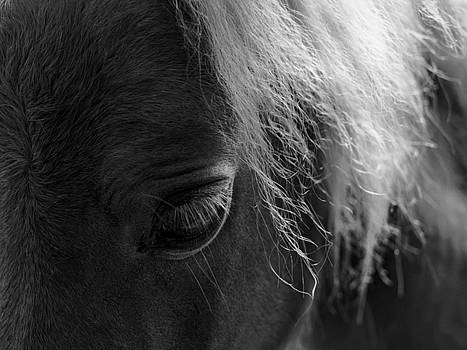 Black And White Close Up Horse by Gothicrow Images