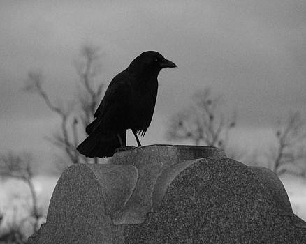 Black And White Crow Watch by Gothicrow Images