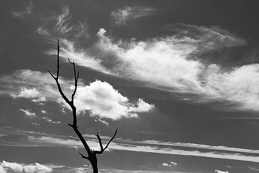 Black and white dead tree and sky with wispy clouds by Bradley Hebdon