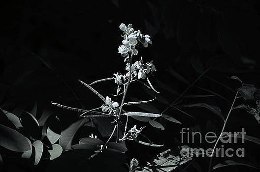 Robyn King - Black and White Floral Nature Art
