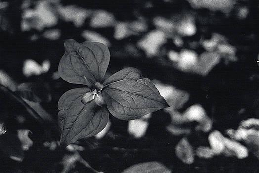 Erik Paul - Black and White Flower