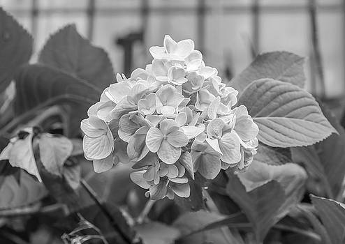 Black and white flower by jeremy raines