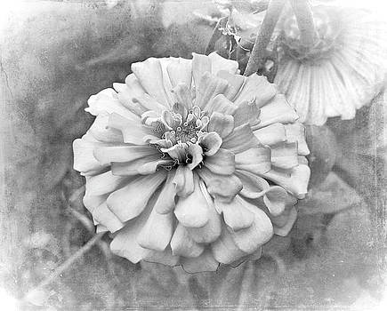 Black and White Flower by Judi Saunders