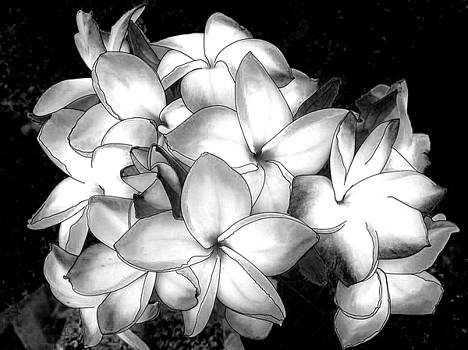 Black and White Flower by Khajohnpan Sauychalad
