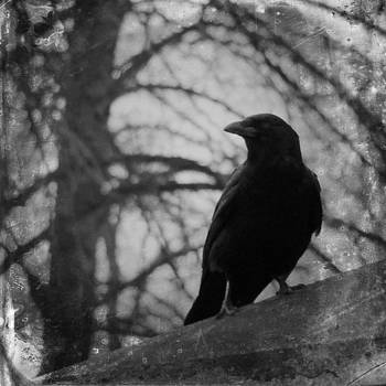Gothicrow Images - Black And White Gothic Crow
