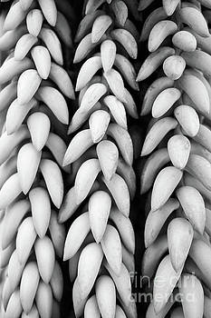 Black and white hanging plant detail. by Cesar Padilla