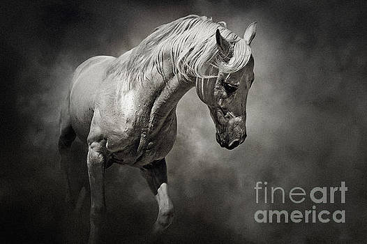 Dimitar Hristov - Black and White Horse - Equestrian art poster