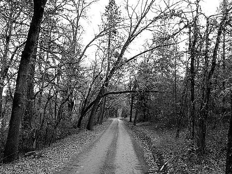 Black and white oak tree lined dirt road in forest. by Jen Lynn Arnold