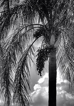 Black and White Palm Tree by Rosalie Scanlon