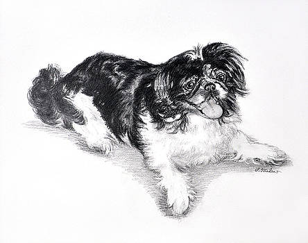 Phyllis Tarlow - Black and White Pekingese