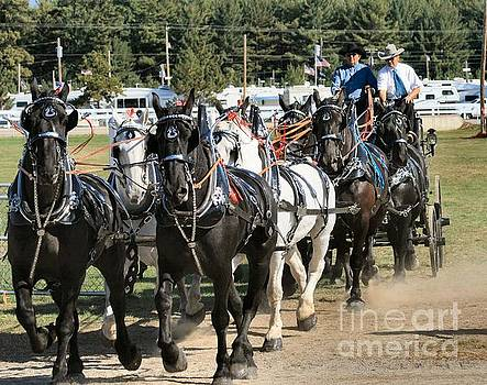 Sandra  Huston - Black and White Percherons