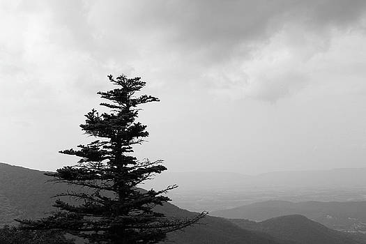 Black and white photograph of a tree on a mountainside overlooking a valley with storm clouds by Natalie Schorr