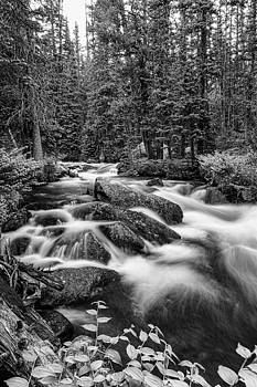 James BO  Insogna - Black and White Roosevelt National Forest Stream Portrait