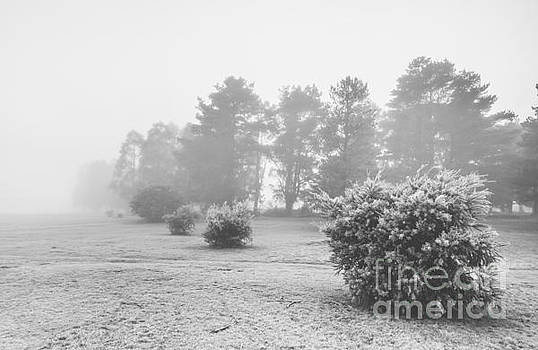 Black and white snow landscape by Jorgo Photography - Wall Art Gallery