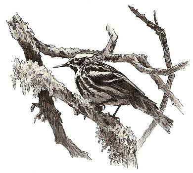 Black-and-white Warbler by Abby McBride