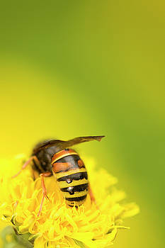 Black and Yellow by Jouko Mikkola
