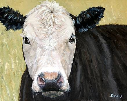Black Angus Cow Steer White Face by Dottie Dracos