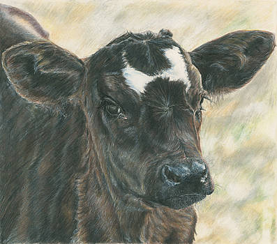 Black Baldy Calf by Tosha Wise
