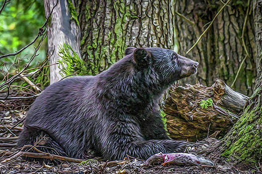 Black Bear At Rest by Joy McAdams